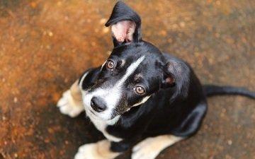 muzzle, look, dog, puppy