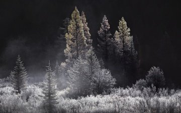 деревья, природа, лес, туман, чёрно-белое