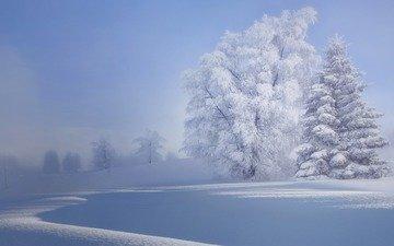 деревья, снег, природа, зима, иней, деравья