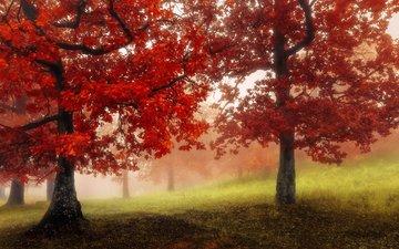 деревья, природа, лес, парк, туман, осень