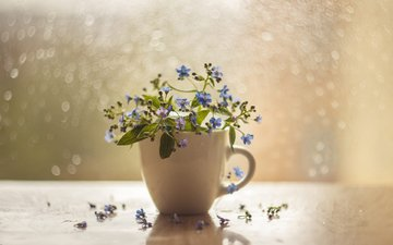 flowers, background, petals, color, cup, forget-me-nots, still life