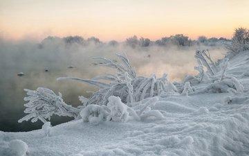 река, снег, природа, растения, зима, туман, кусты, иней