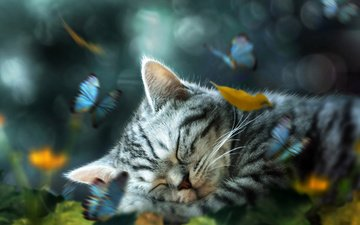 art, nature, sleep, kitty, butterfly, animal, collage