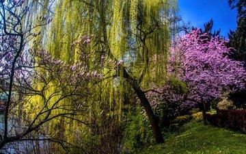 цветение, весна