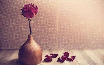 обои, цветок, роза, лепестки, ваза