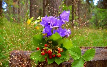 flowers, grass, nature, berries, bells, strawberries, stump
