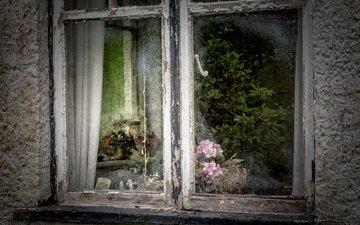 цветы, отражение, дом, окно, стекло