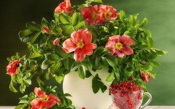 цветы, листья, ветки, шиповник, ягоды, чашка, ваза, натюрморт, смородина