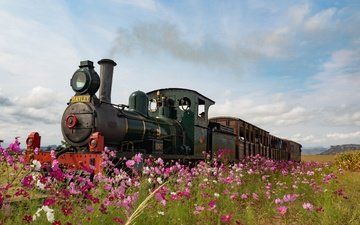 flowers, retro, meadow, england, the engine, kosmeya