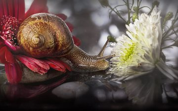 flowers, macro, reflection, snail