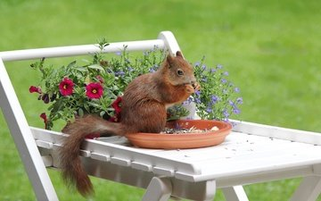 flowers, nuts, saucer, protein, tail, table, bokeh, squirrel, rodent