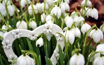 flowers, nature, heart, spring, snowdrops