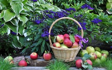 flowers, plants, leaves, fruit, apples, basket