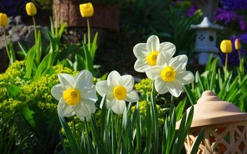 цветы, сад, фонарь, весна, тюльпаны, нарциссы