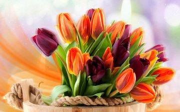 цветы, тюльпаны, боке, ведро