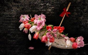 цветы, фон, лепестки, тюльпаны, зонтик