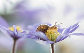 flowers, nature, macro, petals, snail