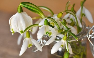 flowers, spring, bank, snowdrops