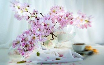 цветы, ветки, лепестки, сакура, чашка, ваза, салфетка