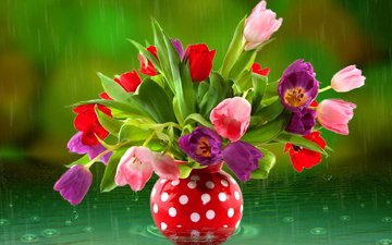 flowers, water, rain, tulips, vase
