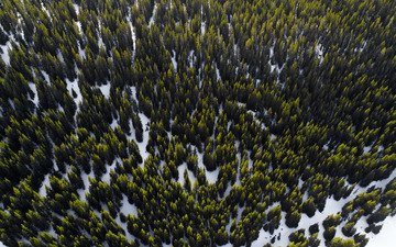 trees, snow, forest, the view from the top