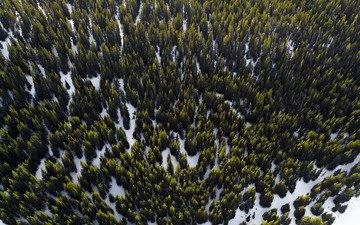 деревья, снег, лес, вид сверху