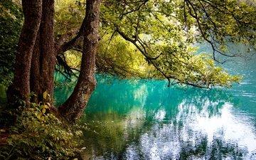 деревья, озеро, отражение, ветви, юлия назаренко