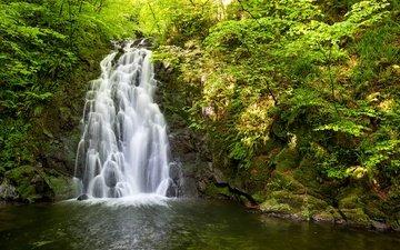 деревья, вода, природа, камни, водопад