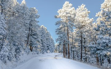 the sky, road, snow, nature, winter, usa, colorado, trees