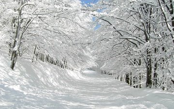 road, trees, snow, nature, winter, branches
