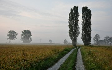 the sky, road, nature, fog, horizon, trees