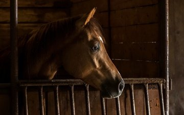 horse, background, mane, stall
