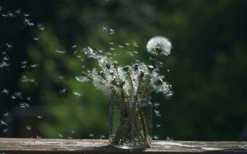 цветы, фон, семена, одуванчики, банка, пушинки, былинки