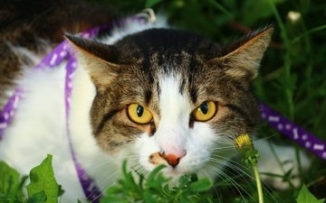 eyes, grass, cat, muzzle, mustache, look