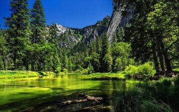деревья, река, горы, лес, калифорния, йосемити, йосемитский национальный парк, сьерра-невада, калифорнийская, деревья, река мерсед, merced river