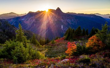 flowers, mountains, nature, park, the bushes, usa, spruce, the sun's rays