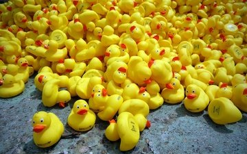 toys, ducklings, duck, rubber duck, rubber ducks