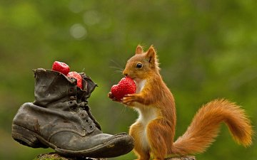 strawberry, shoes, protein, bokeh