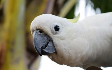 взгляд, птица, клюв, попугай, какаду