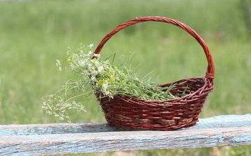 background, basket, wildflowers, shop, yarrow