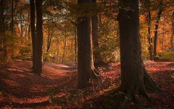 деревья, лес, стволы, осень, сша