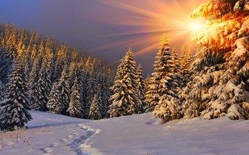 деревья, солнце, снег, природа, лес, закат, зима, лучи, пейзаж, следы, ели