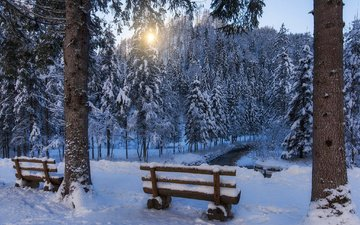 forest, winter, park, stream, benches, bench, ate, trees
