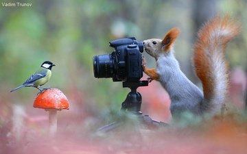 лес, животные, фотоаппарат, птица, гриб, юмор, белка, синица, белочка
