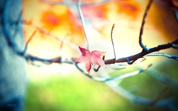 branch, tree, leaves, background, autumn, blur