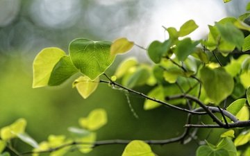 nature, leaves, macro, branches, green, spring