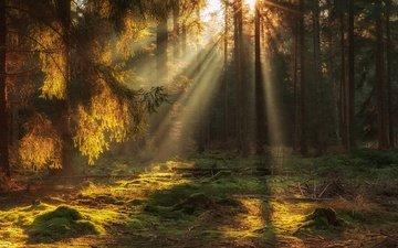 природа, лес, лучи, солнечные лучи