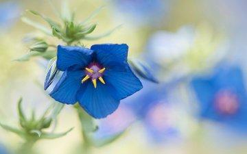 макро, цветок, лето