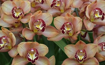 flowers, macro, exotic, orchids