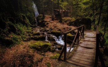 the bridge, forest, stream, waterfall